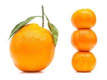 Double Size Orange Royalty Free Stock Photo