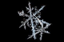 Double Snowflake. On a Black Background Stock Image