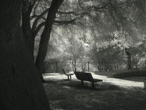 Double Solitude. Infrared photo, Pioneer Park, Novato, California Stock Photos