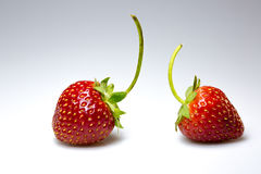 Double strawberry Royalty Free Stock Image