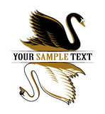 Double swan. Black and white Royalty Free Stock Photography