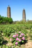 Double temple de pagoda Photo libre de droits
