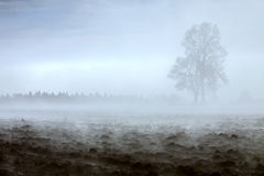 Double tree in morning fog. In the background, ploughed field in front Royalty Free Stock Images