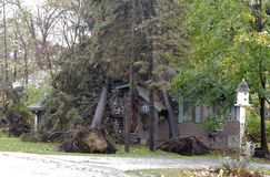 Double tree whammy from hurricane Sandy Stock Photography
