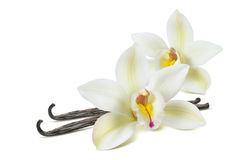 Free Double Vanilla Flower 2 Isolated On White Royalty Free Stock Photo - 92195645