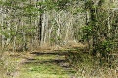 Double voie par des bois Photos stock