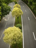 Double way road with trees on center. No traffic double way road with several trees and arbusts on side Royalty Free Stock Photo