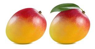 Double whole mango leaf  on white background Royalty Free Stock Photography