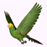 Double Yellow Amazon Parrot Stock Photo