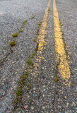 Double Yellow Line with Vegetation Royalty Free Stock Photography
