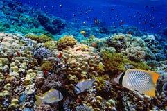 Doublebar rafa koralowa i leszcz Fotografia Royalty Free
