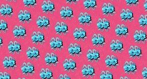 Doubles roses bleues sur le rose Photographie stock libre de droits