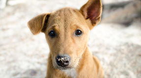Doubt eyes puppy Stock Photo