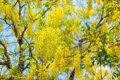 Douche d'or dans le jardin Image libre de droits