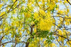 Douche d'or dans le jardin Images libres de droits