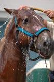 Douche de cheval Image libre de droits