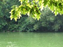 Douche de pluie dans le Central Park Image libre de droits