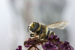Douche de pollen Image stock
