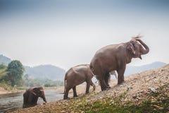 Douche thaïlandaise d'éléphants elles-mêmes Image libre de droits