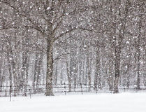 Douches de neige d'avril Photographie stock libre de droits