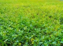 Douches de printemps sur la croissance verte minuscule photos stock