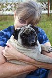 'Dougie' - a 4 year old male Pug dog Stock Photos