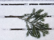 Douglas fir branch on snow facing right Royalty Free Stock Photo