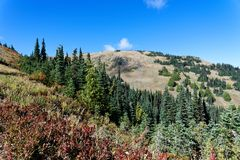 Douglas Fir forests on the Hurricane Hill Trail. Douglas Fir forests along the Hurricane Hill Trail, Olympic National Park Royalty Free Stock Photos