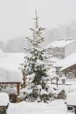 Douglas, montagnes neigées, Pyrénées Image libre de droits
