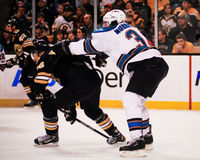 Douglas Murray, San Jose Sharks Immagine Stock