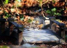 Douglas Squirrel na ponte de madeira imagens de stock royalty free