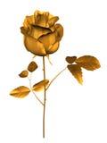 Dourado levantou-se ilustração do vetor