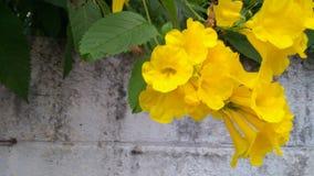 Dourado nativo lilly Imagem de Stock Royalty Free