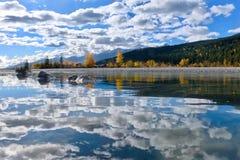 dourado Retrocedendo o rio e as reflexões do cavalo no outono imagens de stock