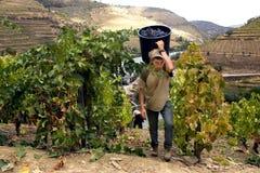 douro葡萄酒 免版税库存图片