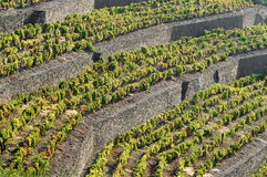 Douro Stock Images
