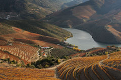 Douro Royalty Free Stock Photo