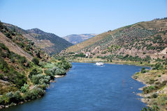 douro河 库存照片