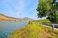 Douro dolina: Brzeg rzeki i winnicy zbliżamy peso da Regua, Portugalia zdjęcie royalty free