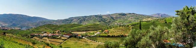 Douro hills panoramic view Stock Photography