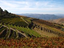 Douro Porto wine region vineyards landscape Portugal. Douro river with vineyards meadows and grafic land lines of grappes plantation at São João da royalty free stock images