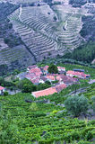 The Douro, Portugal. Vineyards near the Douro river. Here starts production of Porto Royalty Free Stock Images