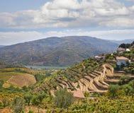 douro Portugal dolina Zdjęcia Stock
