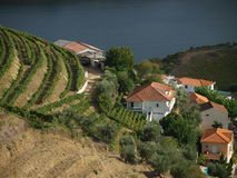 Douro river and Covelinhas village Royalty Free Stock Images