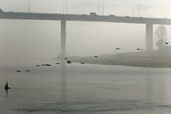 Douro river in the morning mist Royalty Free Stock Photography