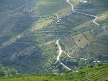 Douro Valley vineyards aerial view Stock Images