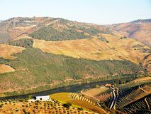 Douro river vineyards landscape Portugal. Douro river with vineyards meadows and grafic land lines of grappes plantation at Pinhão region royalty free stock photography