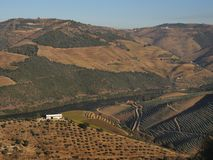 Douro river vineyards landscape Portugal. Douro river with vineyards meadows and grafic land lines of grappes plantation at Pinhão region stock image