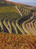 Douro wine region vineyards landscape Portugal. Douro river with vineyards meadows and grafic land lines of grappes plantation at São João da Pesqueira royalty free stock image