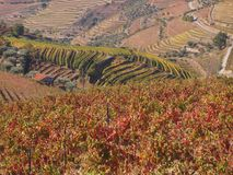 Douro wine region vineyards landscape Portugal. Douro river with vineyards meadows and grafic land lines of grappes plantation at São João da Pesqueira royalty free stock photography